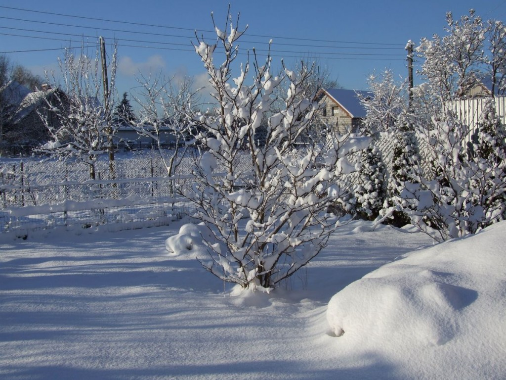 zima-w-ogrodzie-05