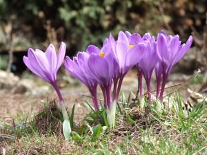 Niedługo w ogrodzie znów będzie kolorowo