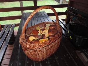 Koszyk jadalnych grzybów