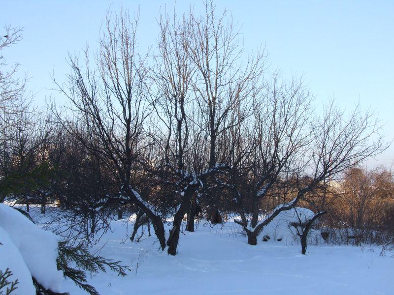 Zima w ogrodzie tylko we wspomnieniach