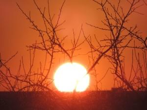 Zachód słońca nad ogrodem