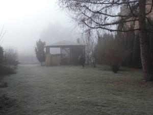 Zamglony ogród
