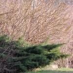 Słoneczny ogród w lutym