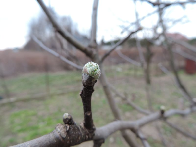 Niebawem będą już liście na drzewach i krzewach