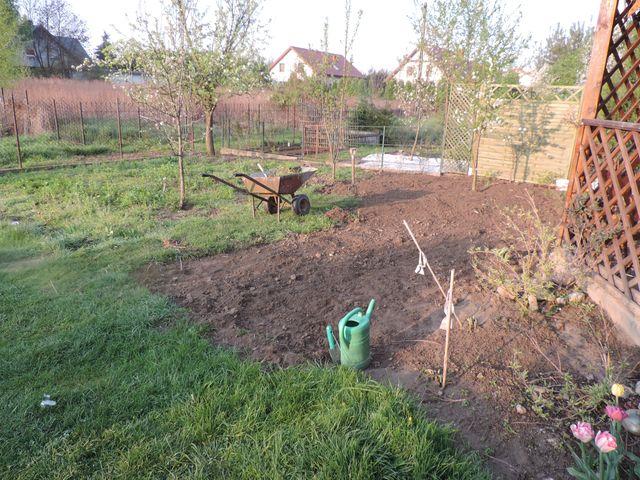 Przyszły trawnik częściowo oczyszczony