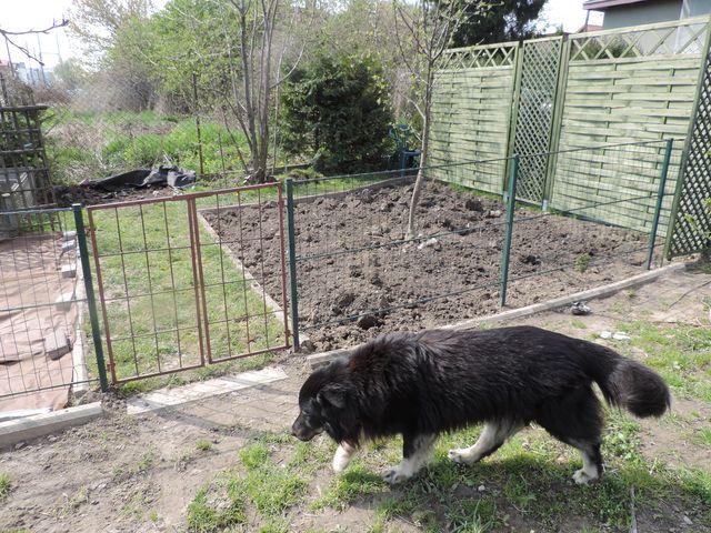 Ogród warzywny już wyplewiony