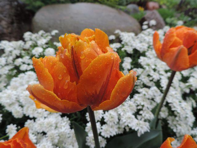 Krople deszczu na kwiatach
