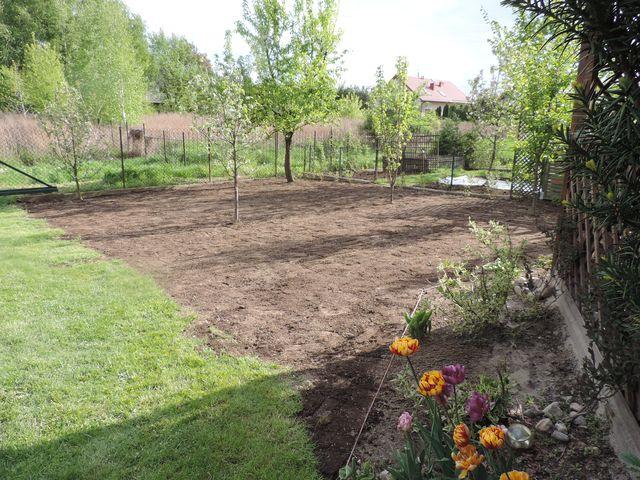 Trawnik gotowy teraz tylko podlewać i patrzeć jak rośnie trawa