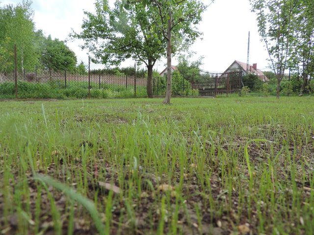 Widać jak rośnie trawa