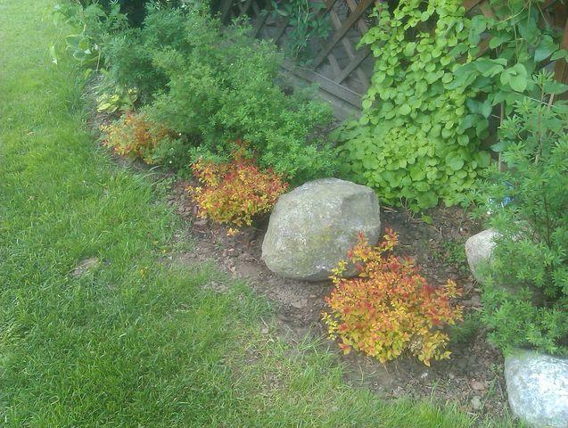 Nowe roślinki w ogrodzie