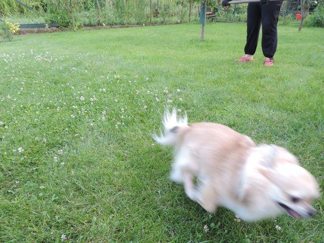 Uciekający zając