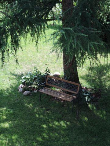 ławeczka pod modrzewiem