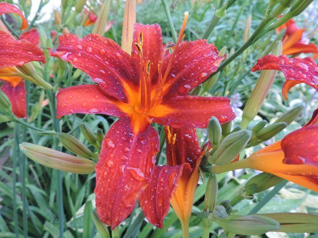 Kwiaty po deszczu