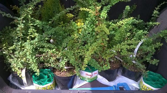 Przyjechały nowe roślinki do ogrodu
