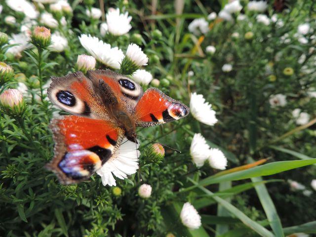Motyli elegant posila się