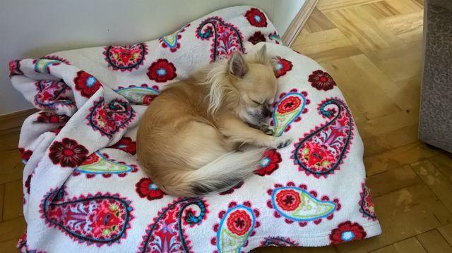 Dyzio śpi w łóżeczku