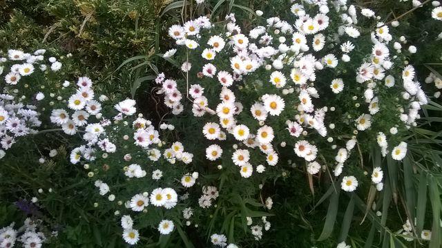 Jeszcze kwitną kwiaty