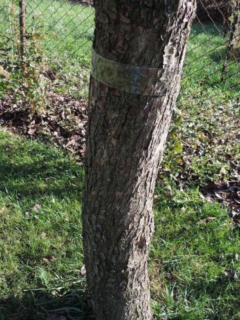 Lep na drzewie prawie niewidoczny
