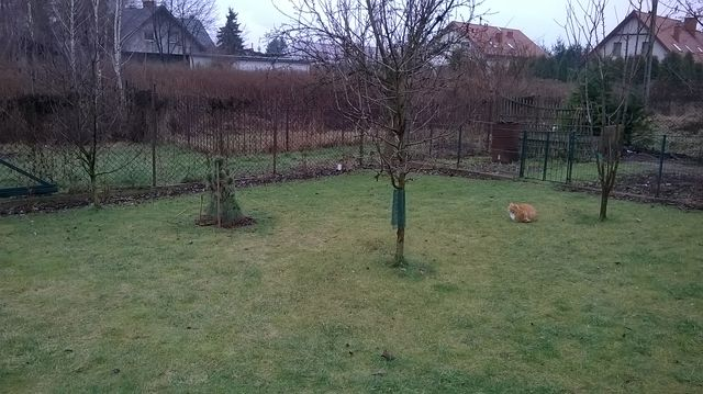 Ciepły styczeń w ogrodzie