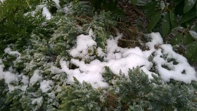 Gdzie niegdzie w ogrodzie resztki śniegu jeszcze są