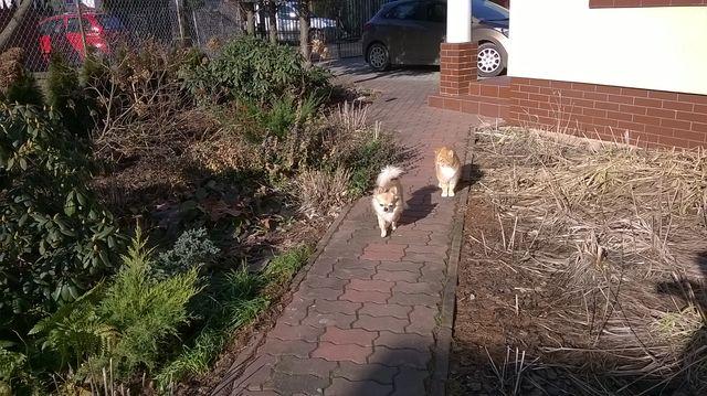 Zwierzaki na wspólnym spacerze