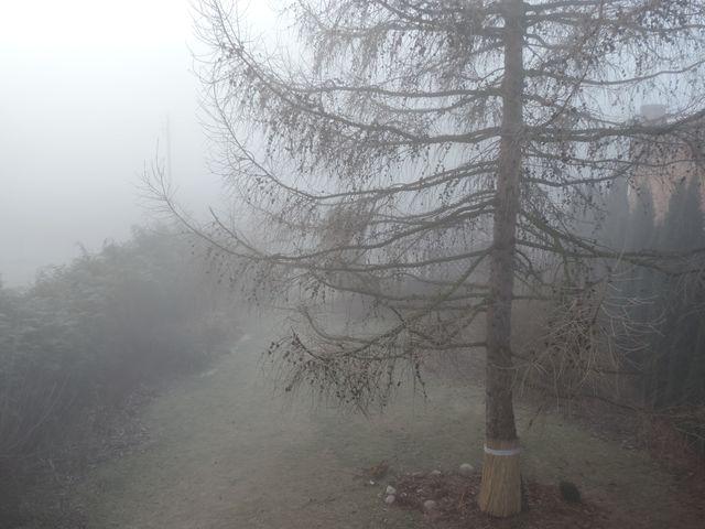 Poranna mgła w ogrodzie