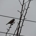 Ptaki śpiewają w ogrodzie