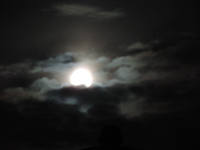 Piękny księżyc nad ogrodem
