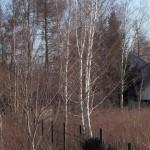 Ostatnie dzikie otoczenie ogrodu