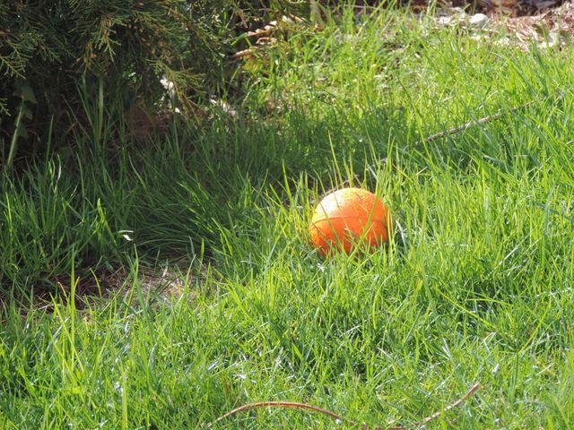 Wielkanoc w ogrodzie