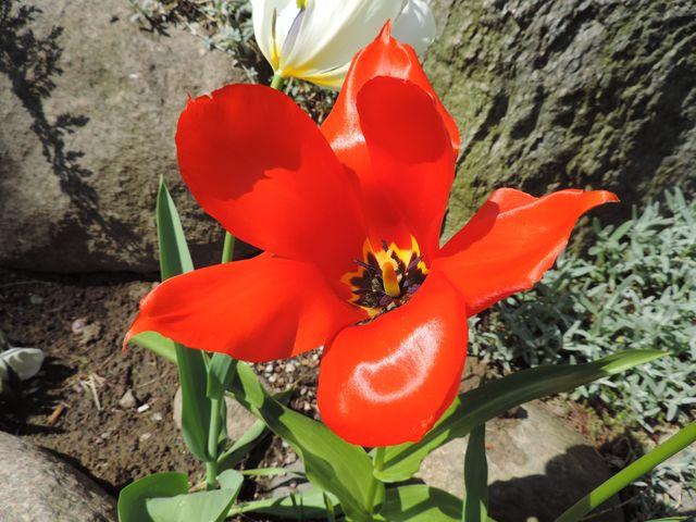 W ogrodzie wiosna w pełni