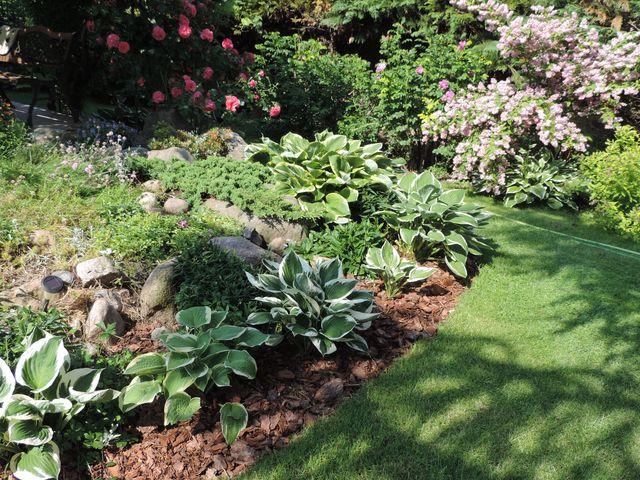 Kwiaty w czerwcowym ogrodzie