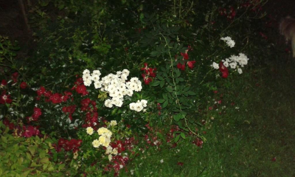 Kwiaty nocą