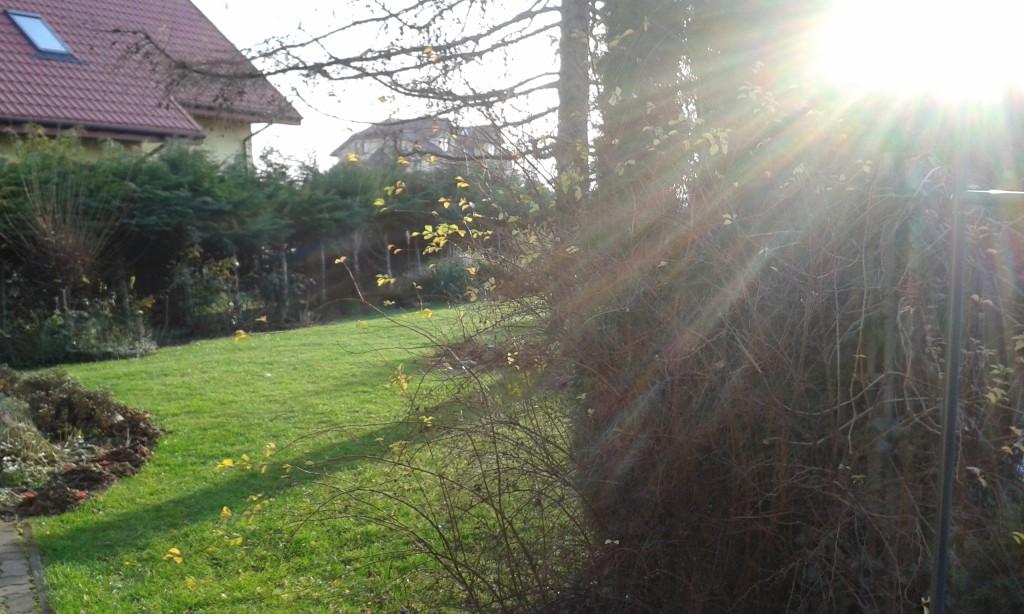 Słoneczna grudniowa jesień w ogrodzie