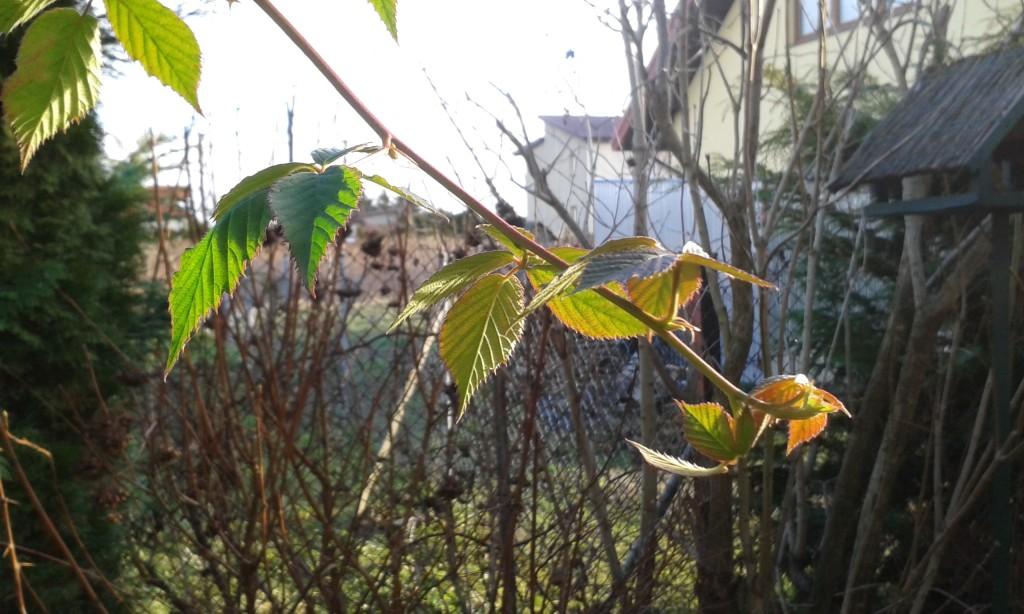 Ciepły koniec grudnia w ogrodzie