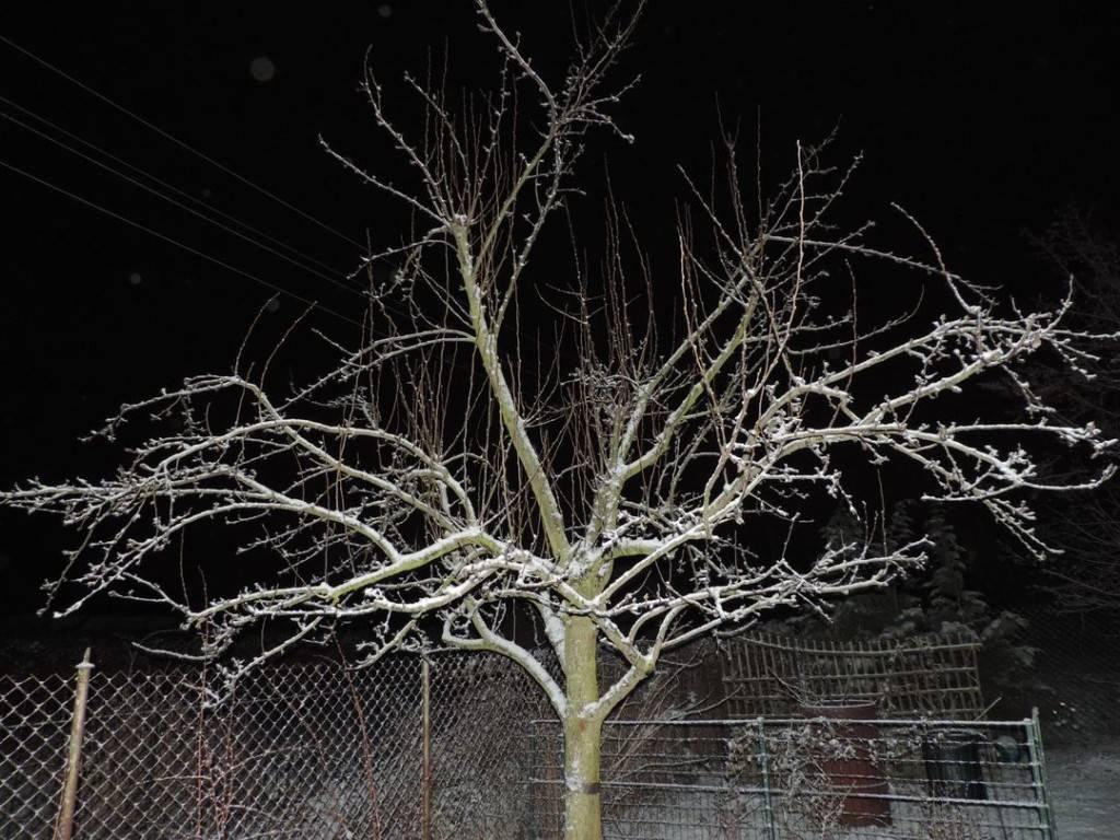 Nocą drzewa są takie tajemnicze :)