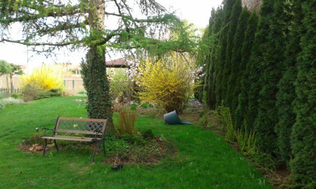 Wiosenny poranek w ogrodzie