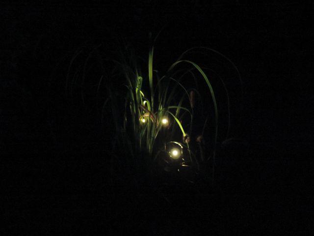 Ciepły wieczór w ogrodzie