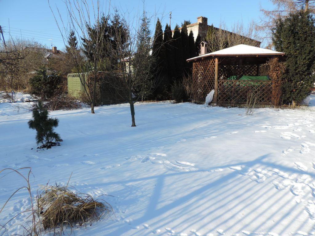 Ogród w śnieżnej bieli