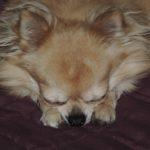 Dyzio śpi