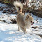 Dyzio na spacerze
