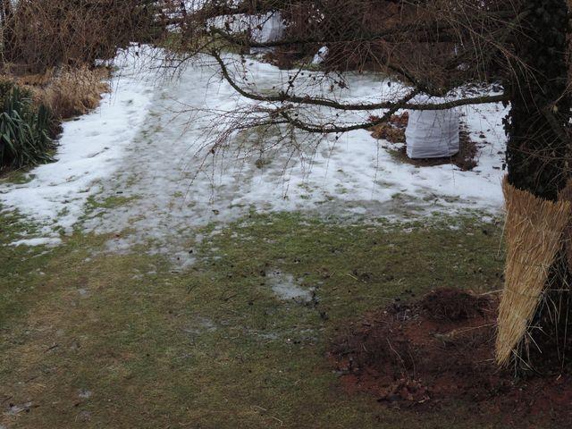śnieg w ogrodzie znika w szybkim tempie