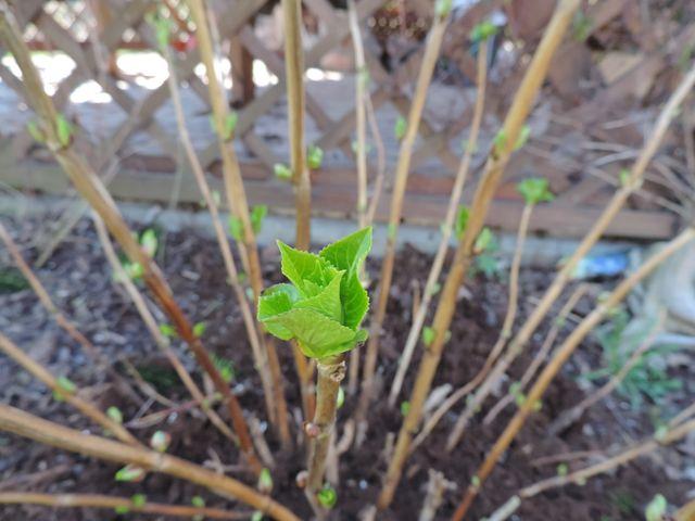 Pierwsze zielone liście