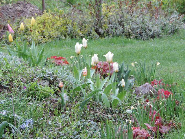 Na skalniaku pojawiają się pierwsze kwiaty