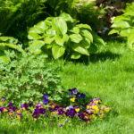 Ziemovit sposoby na wytrzymały trawnik