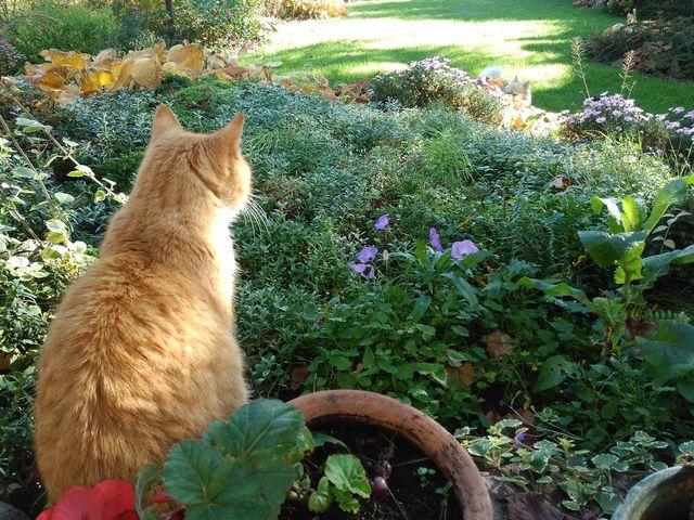 Pusia w jesiennym ogrodzie