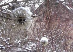 Śnieżna zima wróciła do ogrodu