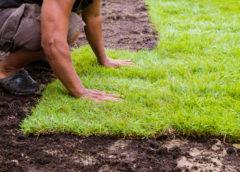 Wiosenne porządki wokół domu i w ogrodzie – co trzeba zrobić?