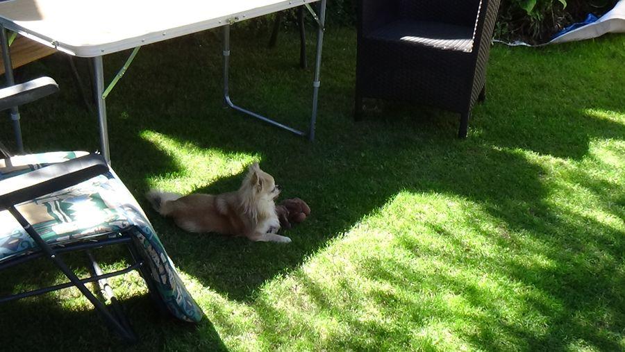 Pies ogrodnika już dogląda prac przy oczku