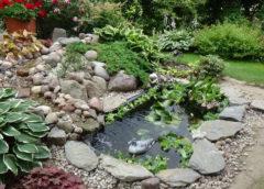 Oczko wodne już obsadzone roślinami